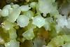 200130_Flora2