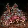 200204_Scorpionfish