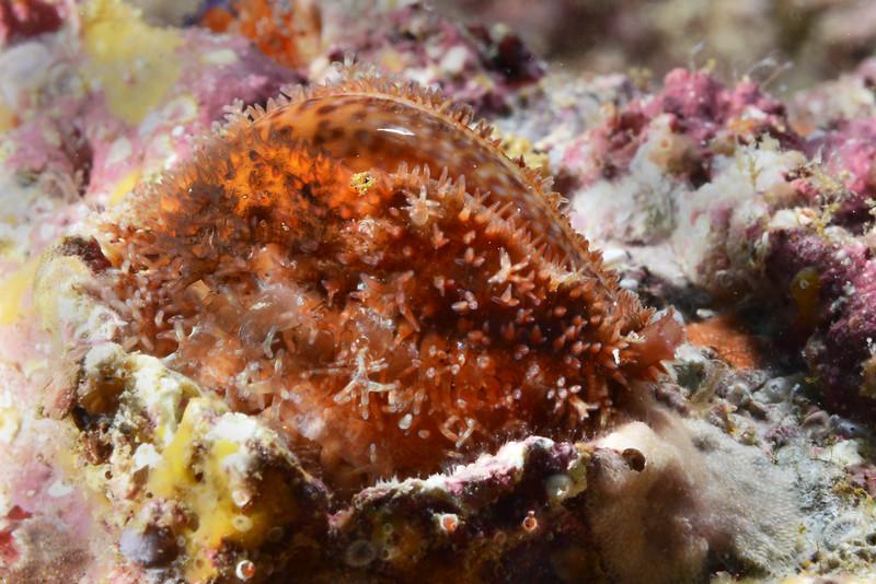 Snail<br /> Cousin's Rock, Galapagos, Ecuador