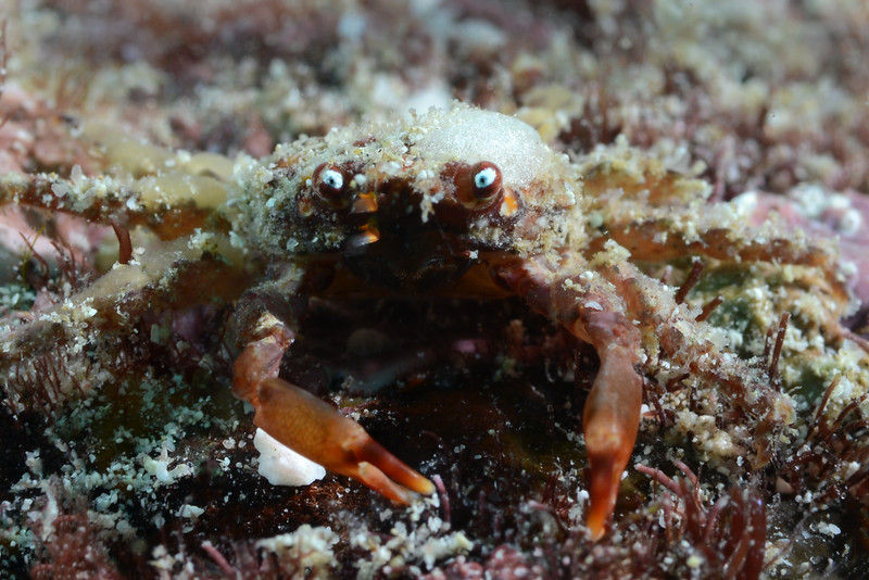 200128_Crab