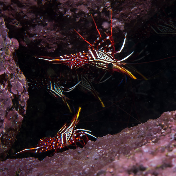 200203_Shrimps2