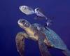 200201_Turtle2