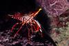 200204_Shrimp