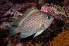 200204_FishID3c