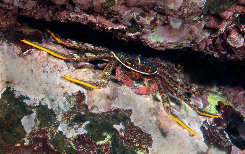 200201_Crab