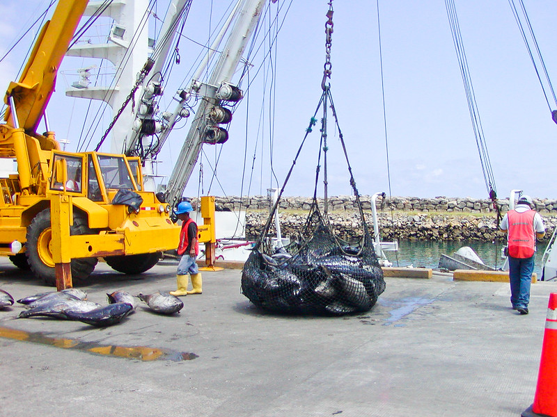 Offloading tuna from fishing boat, Manta, Ecuador