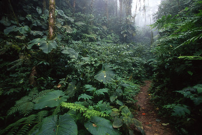 Mountain jungle vegetation at Bellavista Cloud Forest Reserve, north of Quito