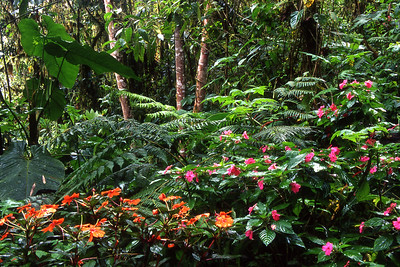 Wildflowers at Bellavista Cloud Forest Reserve, north of Quito