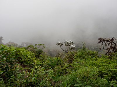 Bellavista cloud forest