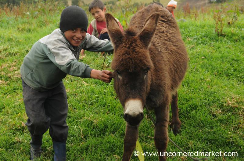 Showing Off His Donkey - Otavalo, Ecuador