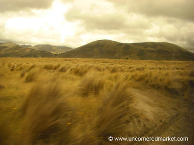 Fields of Gold - Quilotoa Loop, Ecuador