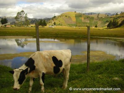Agricultural Landscapes - Quilotoa Loop, Ecuador