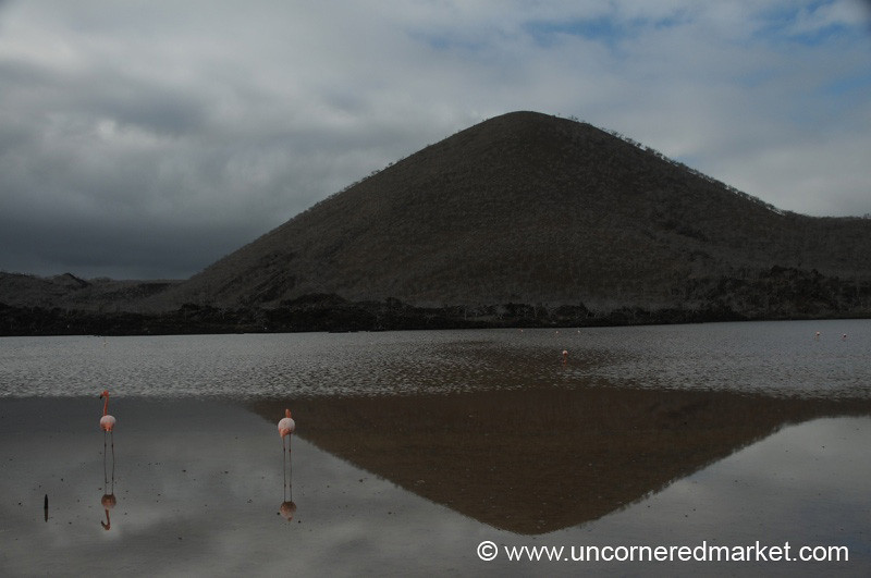 Volcanic Reflections - Galapagos Islands