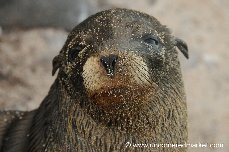 Up Close with a Sea Lion - Galapagos Islands
