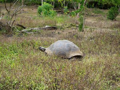 Rancho El Manzanillo - giant tortoises