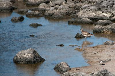 Bird in water in the Galapagos Islands