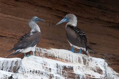 Birds in the Galapagos Islands