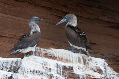 Birds in the Galapagos Islands