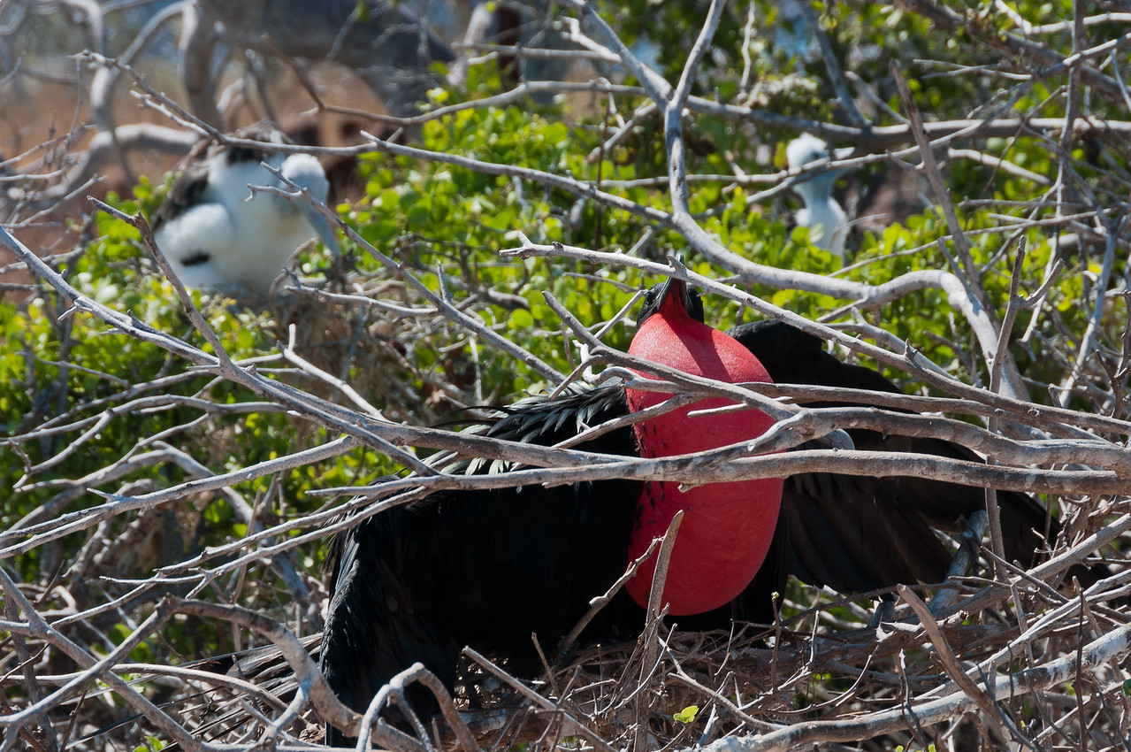 Bird perched on a tree in the Galapagos Islands