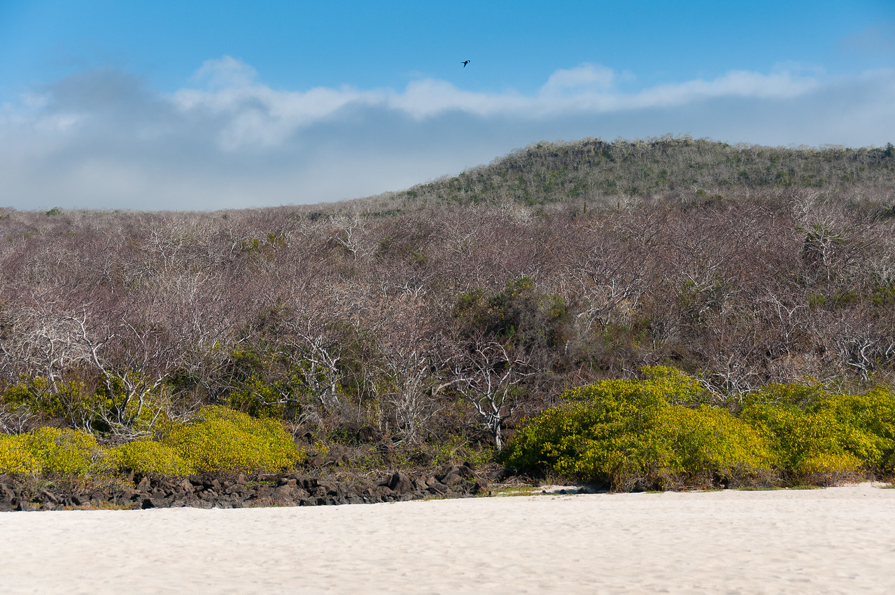 Landscape in the Galapagos Islands