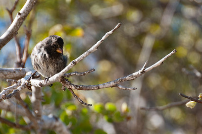 Bird on a tree branch in the Galapagos Islands