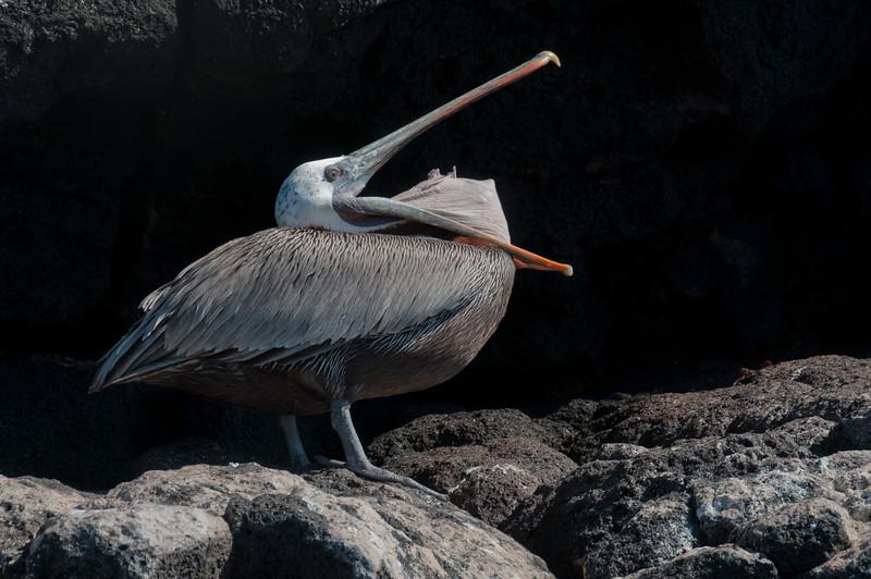 Bird in the Galapagos Islands