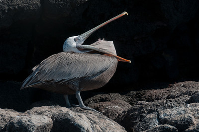 Bird in the Galapagos Islands