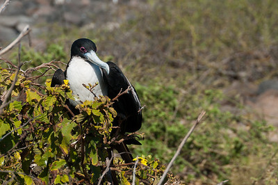 Bird perched on a tree branch - Galapagos Islands