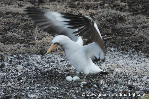 A Peek at the Eggs - Galapagos Islands
