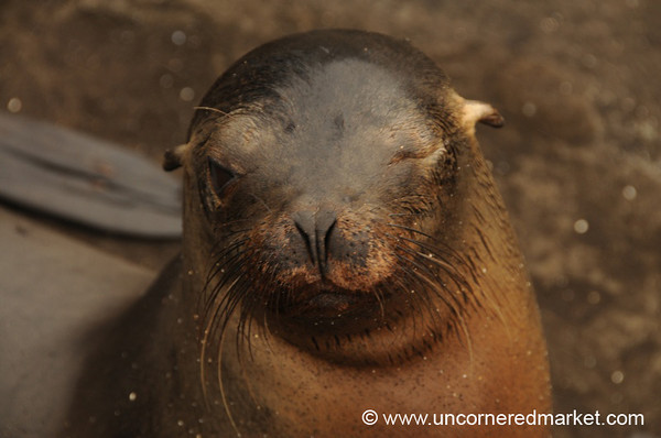 Here's Looking at You - Galapagos Islands