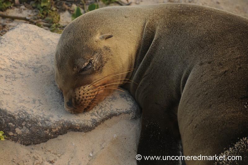 Rock as a Pillow - Galapagos Island