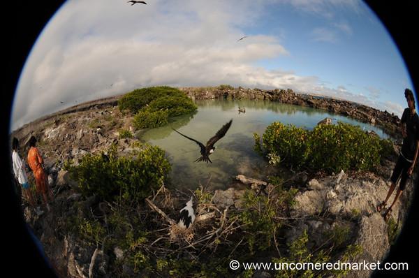Bird Landing, Genovesa Island - Galapagos