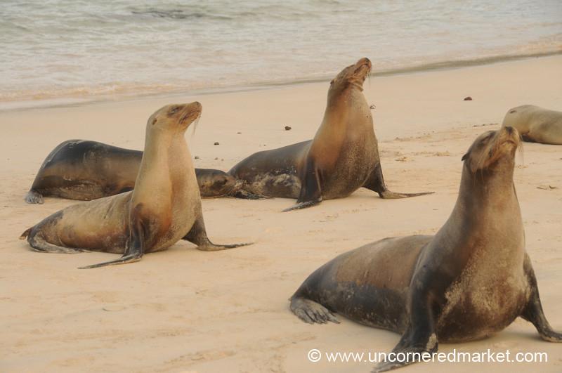 Sea Lion Yoga? Galapagos Islands