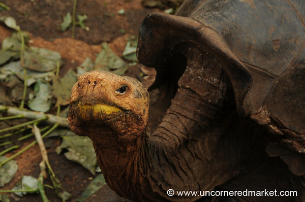 Gringo Diego Smiles for the Camera - Galapagos Islands