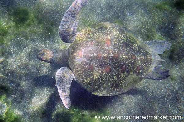 Above a Sea Turtle - Galapagos Islands
