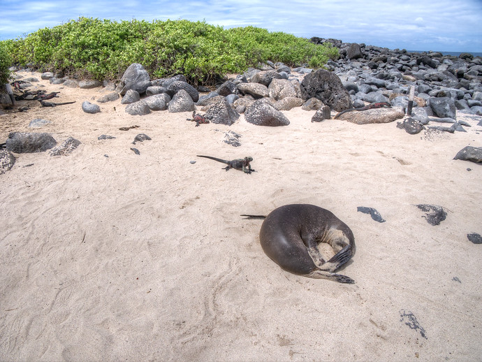 galapagos animals
