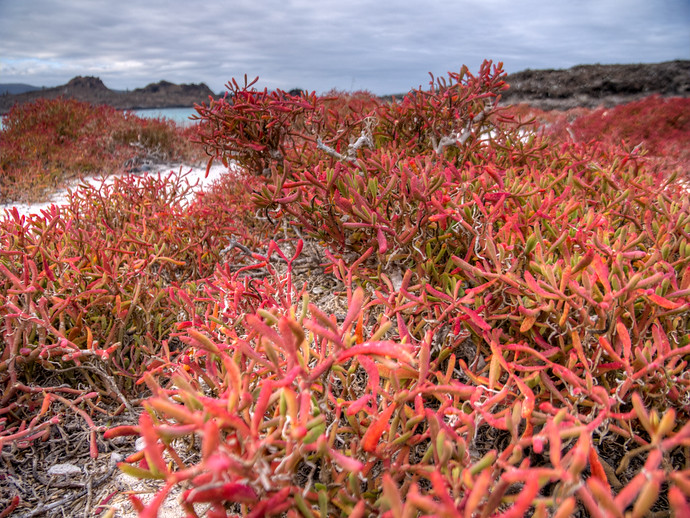 galapagos red plants