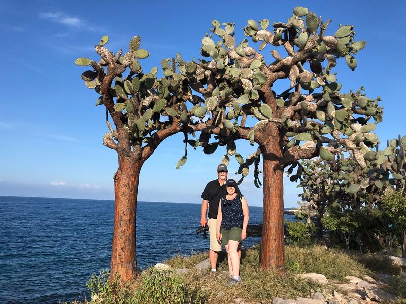 Cactus - Galapagos
