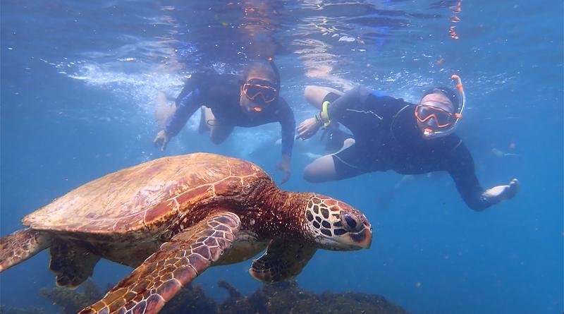 Turtle Galapagos - photo by Quasar
