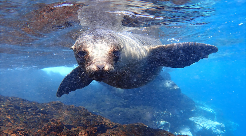 Sea Lion - photo by Quasar