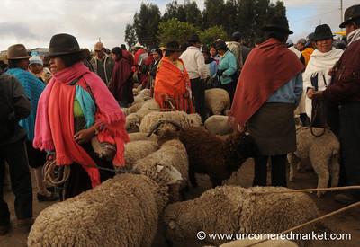 Sheep Trading - Saquisili, Ecuador