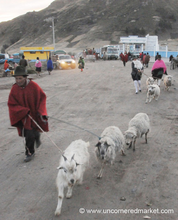 Taking Goats to Market - Zumbahua, Ecuador
