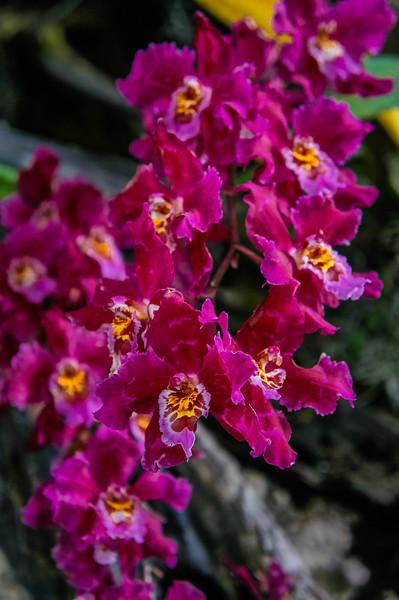 Orchids at Quito's Botanical Garden in Ecuador