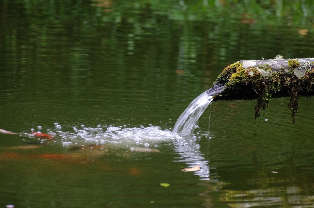 Sachatamia Fish Pond