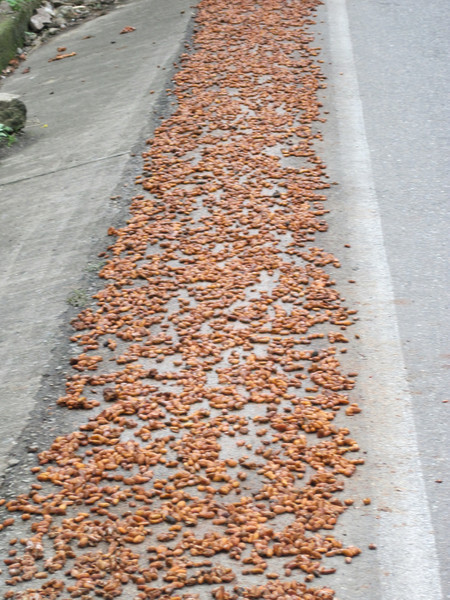 Drying Produce on the Roadside