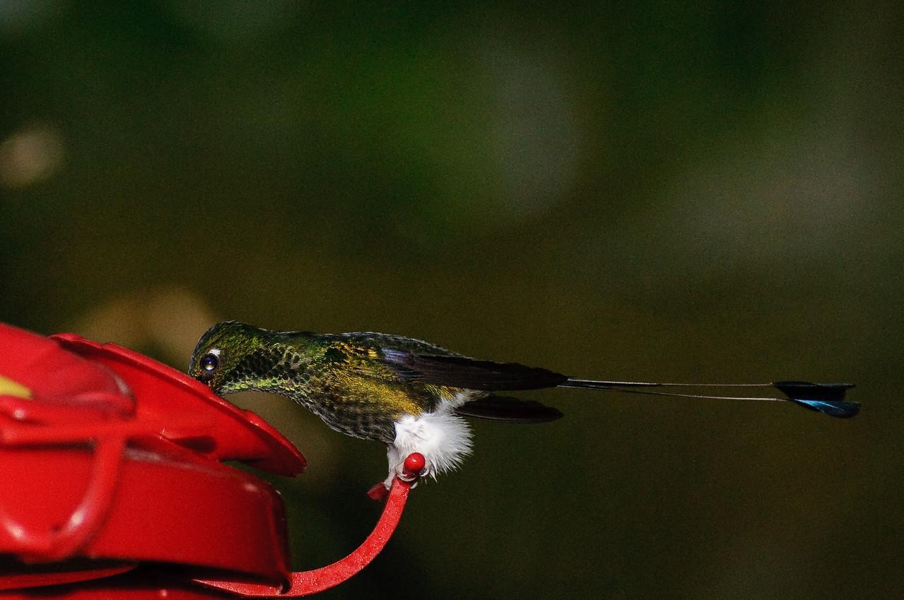 Hummingbirds at Sachatamia