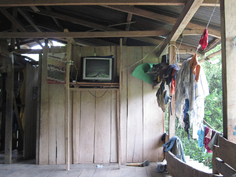 Jungle TV