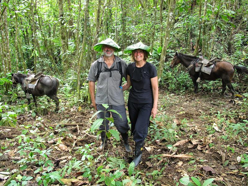 Rainforest Locals