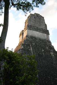The Mayan Ruins of Tikal in Guatemala...