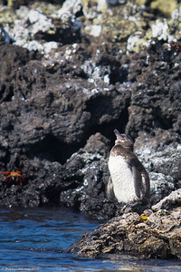galapagos-wildlife-10
